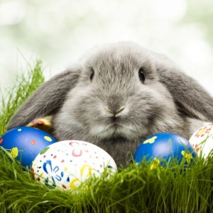 rabbit_easter_egg_04-500x500
