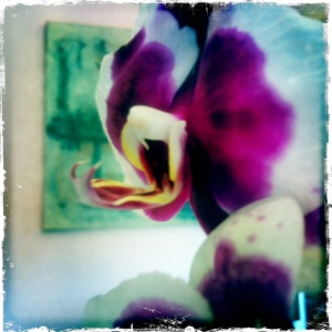 Dragon Orchid