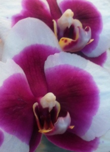 More orchids1